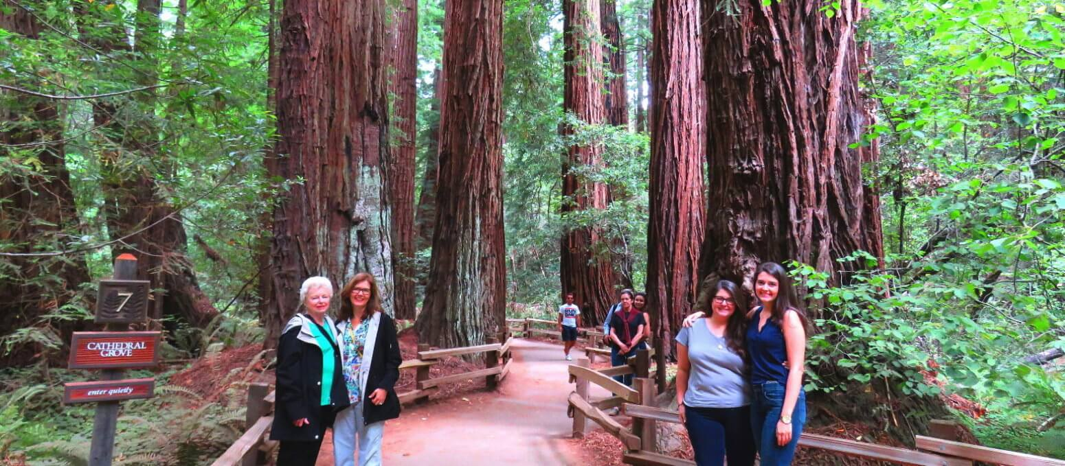 Muir-Woods-National-Monument-Redwoods