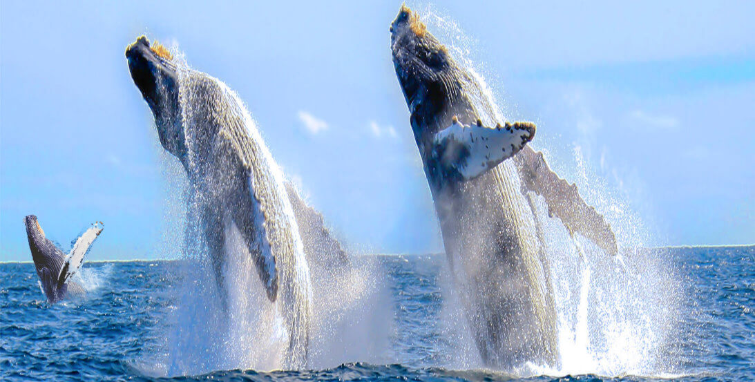 San-Francisco Whales-watching-Tour- Monterey-Bay-Attractions