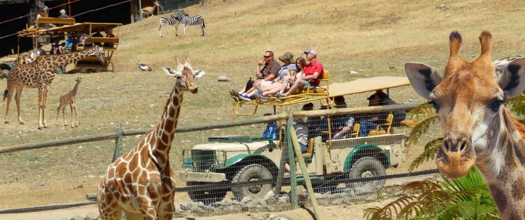 The Best Safari West Jeep Tour +  Alcatraz Tickets