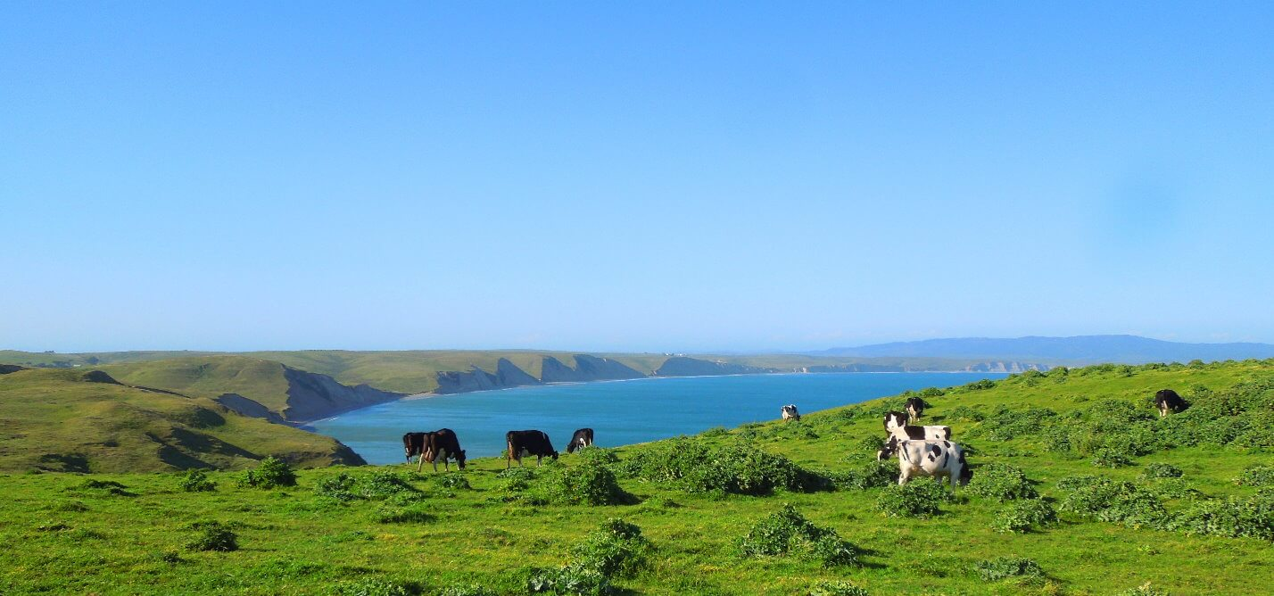 Top-Attractions-in-Point-Reyes-National-Seashore-Tomales-Bay