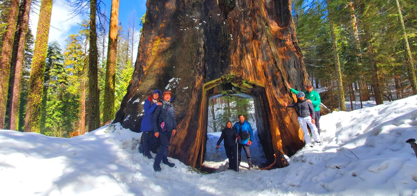 giant_sequoia_trees__hike_trail_on_the_snow__in_yosemite_in_winter