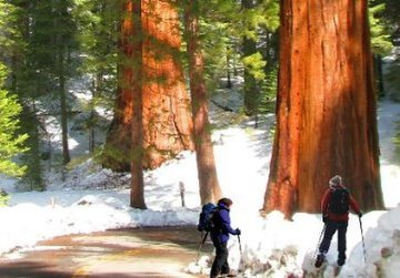 hike to mariposa  grove of sequoias.jpg